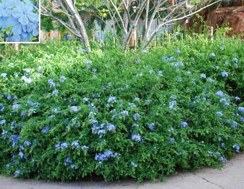 Gilbert Arizona Landscaping Plants List